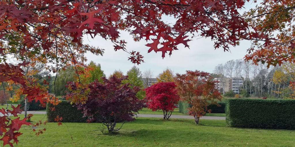 Bäume Im Herbstlichen Gewand